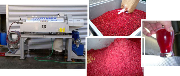 Cranberry Juice production